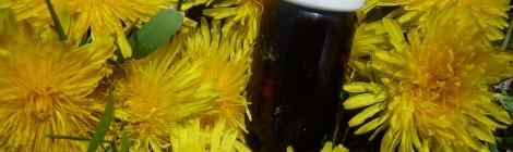 de la plante aromatique à l'huile essentielle …