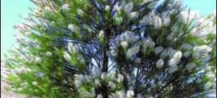 Le Baume «Oxygène» pour dégager les voies respiratoires