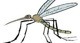 Les moustiques ou autres insectes