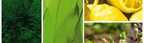 Vert Fraîcheur – Green Freshness
