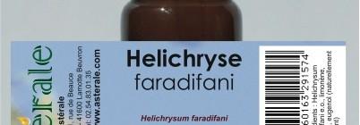 Hélichryse Faradifani Helichrysum Faradifani