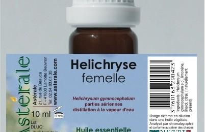 Hélichryse femelle Helichrysum Gymnocephalum