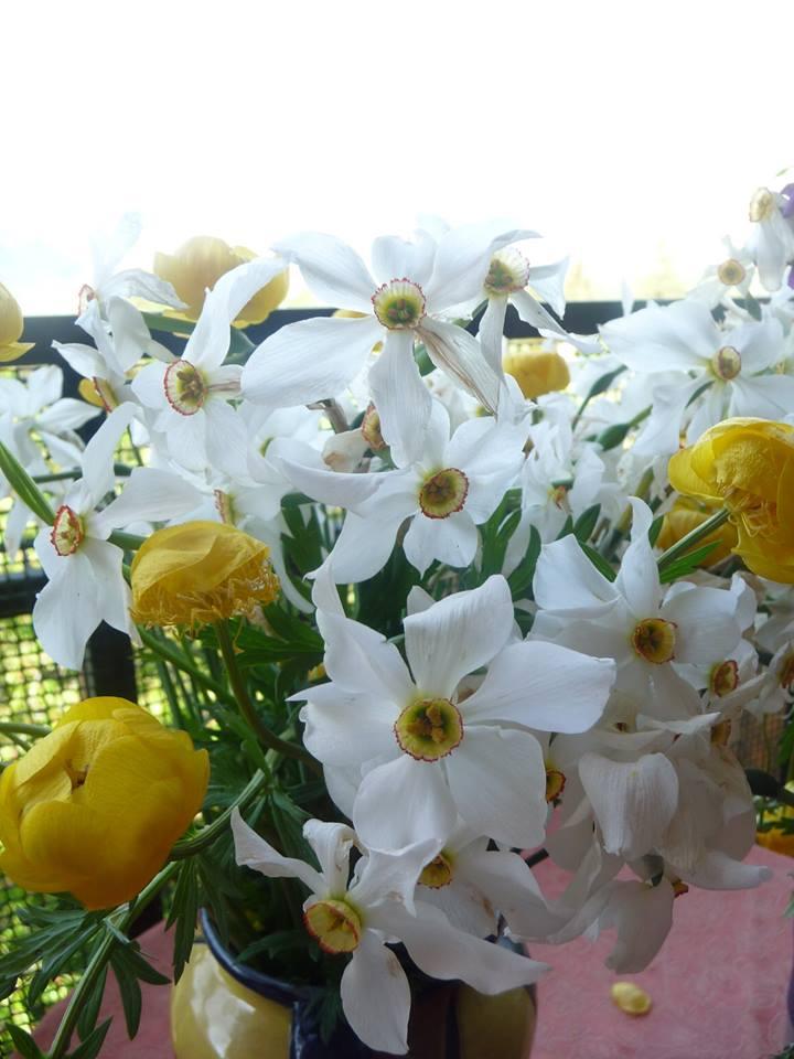 bouquet Nat