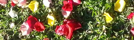 Les couleurs de l'été …. Le Rose ….