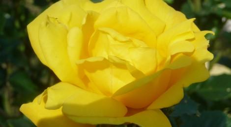Les couleurs de l'été : Le Jaune