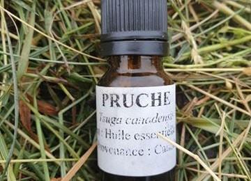 Huile Essentielle de Pruche «Tsuga Canadensis»